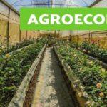 7047 agroecologia