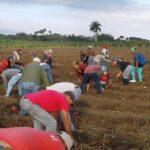 CTC trabajo voluntario