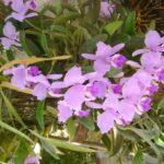 4 orquideas