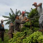 jovenes en la agricultura