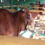 UEB Rancho Los Molinos 3716