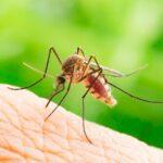 el mosquito tigre en una europa mas calida 255241 2 1280