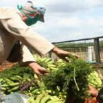 2424 Alimentos Cuba pl