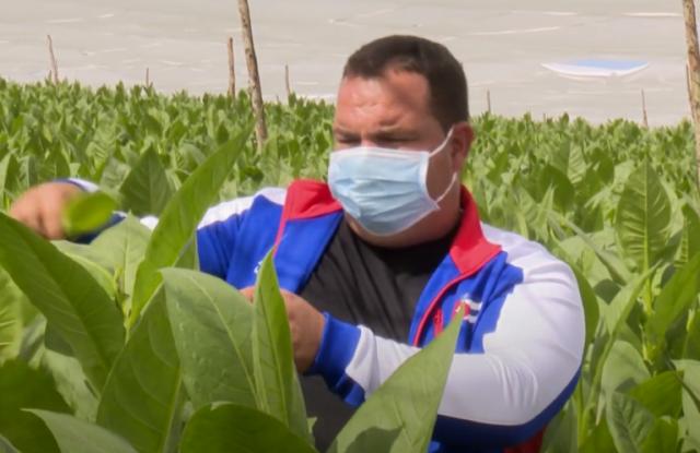 Destaca joven campesino de Cabaiguán por la diversidad y calidad de sus producciones agropecuarias (+ Video)