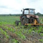 produccion de alimentos en yaguajay