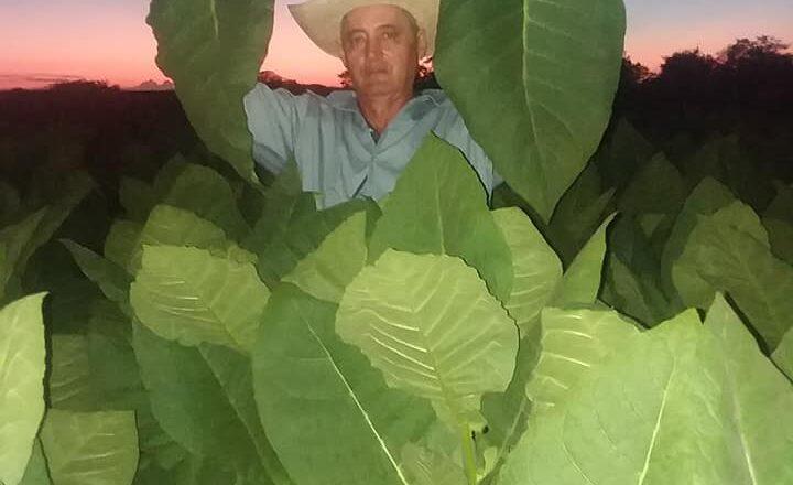 El Isleño, un guajiro que riega la cosecha con el sudor de su frente (+Fotos)
