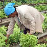2 agricultura urbana