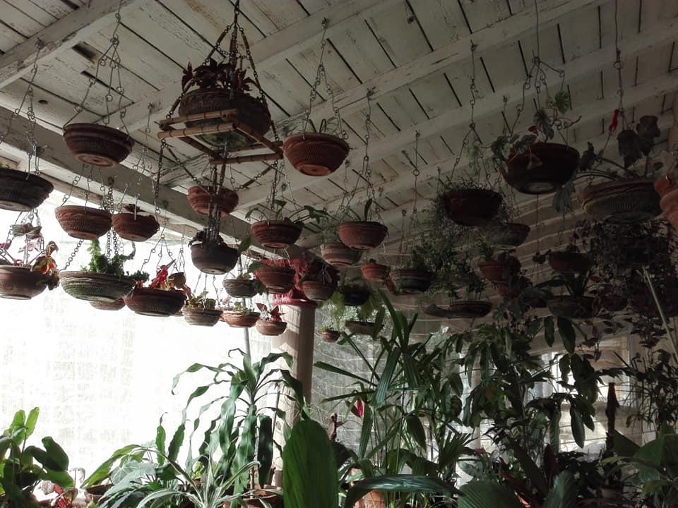 jardin colgante cabaiguan macetas techo