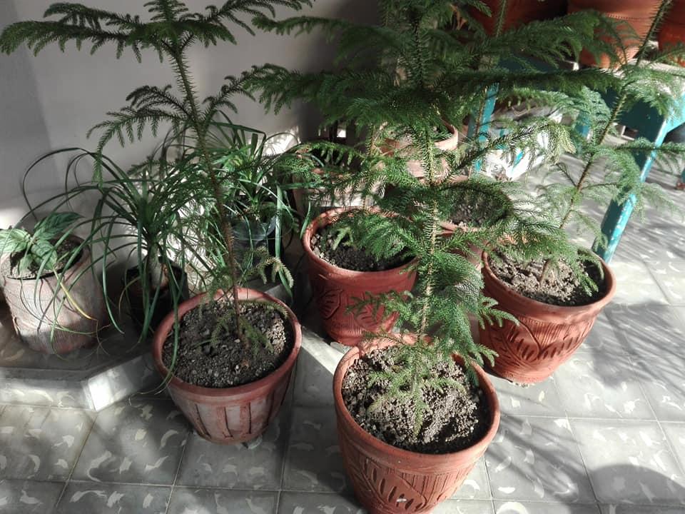 jardin colgante cabaiguan macetas