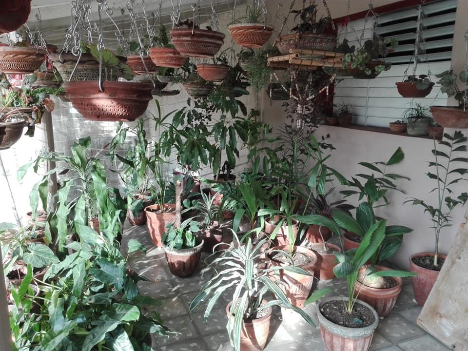jardin colgante cabaiguan pared