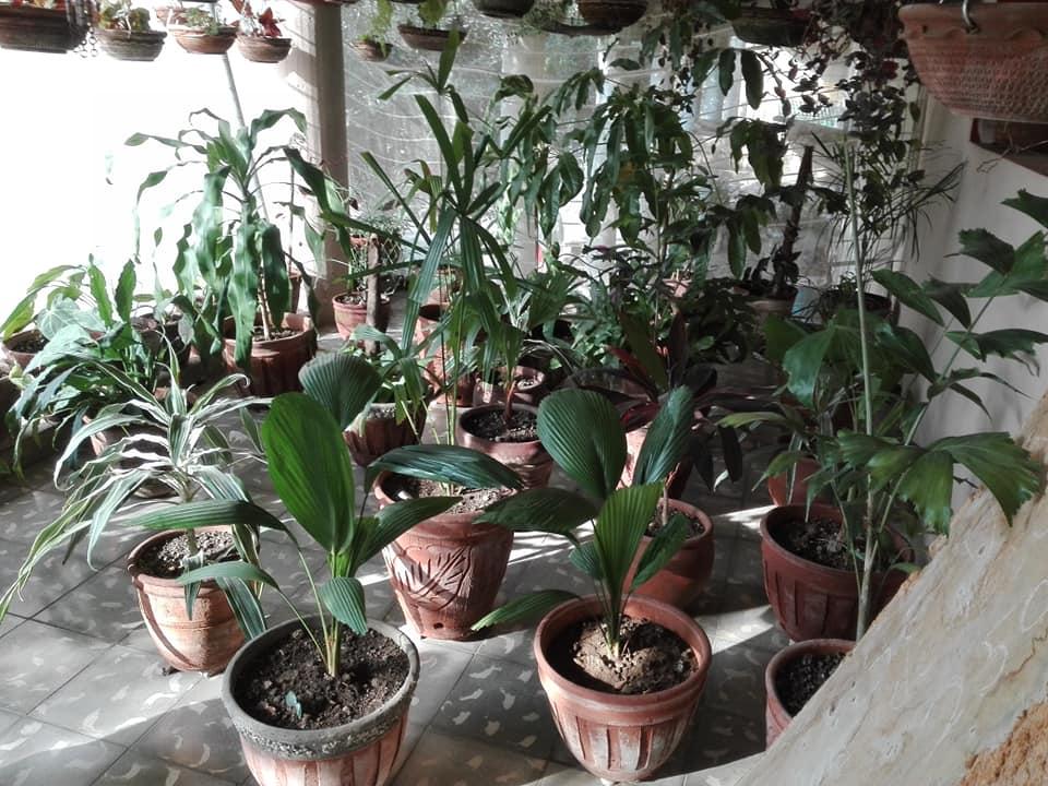 jardin colgante cabaiguan piso