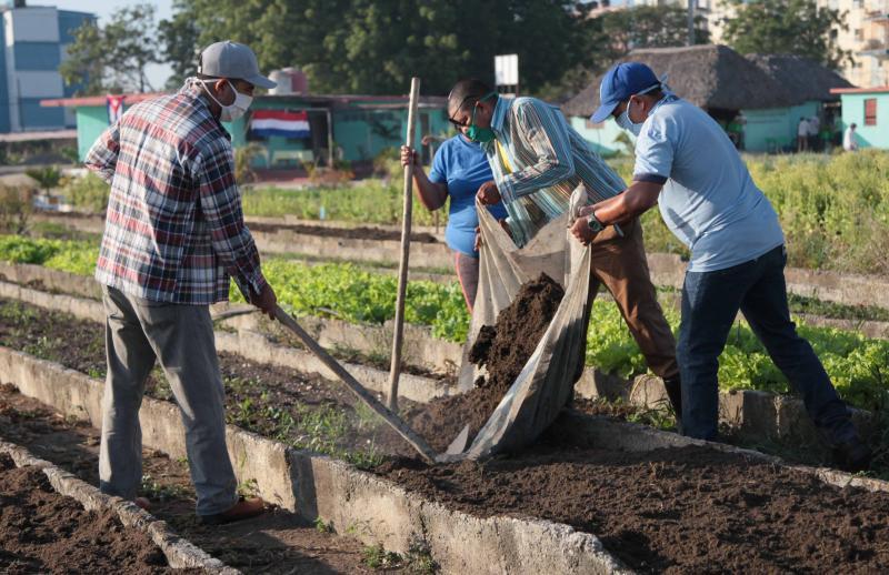Trabajo voluntario desarrollado en el municipio de Sancti Spíritus.