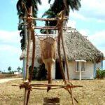 1- Museo Etnográfico Regional Campesino de Cabaiguán (Archivo)
