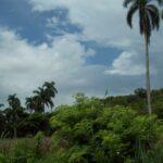 paisaje de cabaiguán en primavera