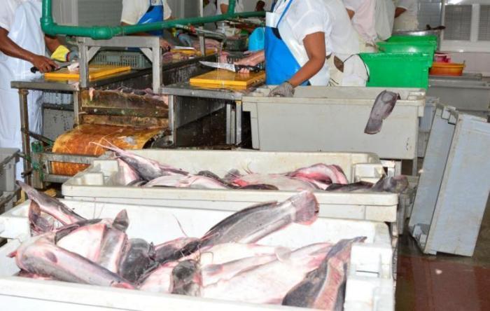 industria-pesquera