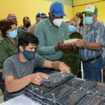 El Vicepresidente de la República Salvador Valdés Mesa visitó este jueves la planta de granos de Yaguajay y también áreas agrícolas en la empresa Valle del Caonao